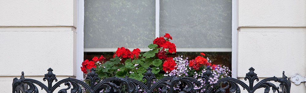 paris _ garden